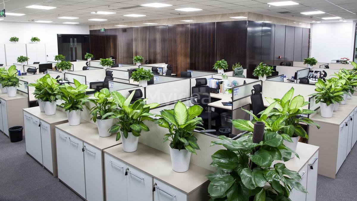 佛山美格利生为大家带来木制办公家具的木材区别